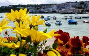 St Ives through flowers