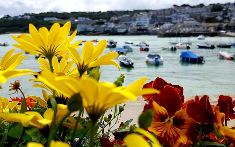 St Ives through flowers